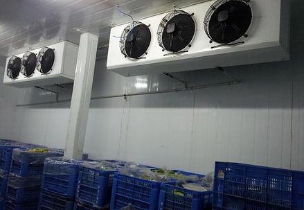 Taylor Cold Storage