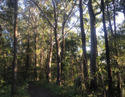 Beautiful forest trails