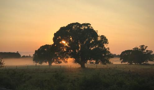 Dawn breaking - The Pocket