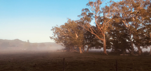Misty Morning in The Pocket