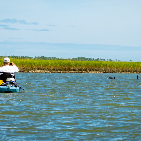 Surf The Earth North Inlet Kayak Tour