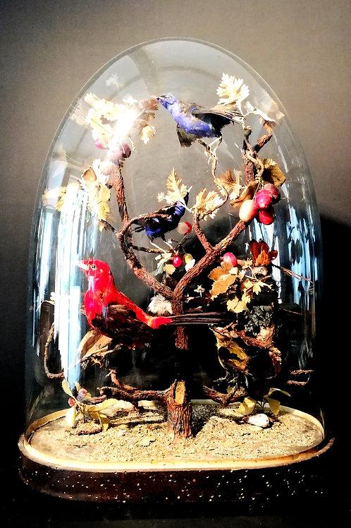 Globe aux oiseaux XIXème.