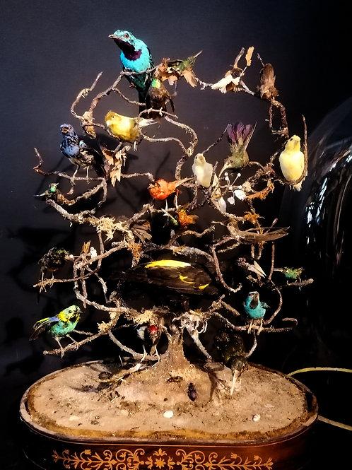 Globe aux oiseaux, début XIXeme