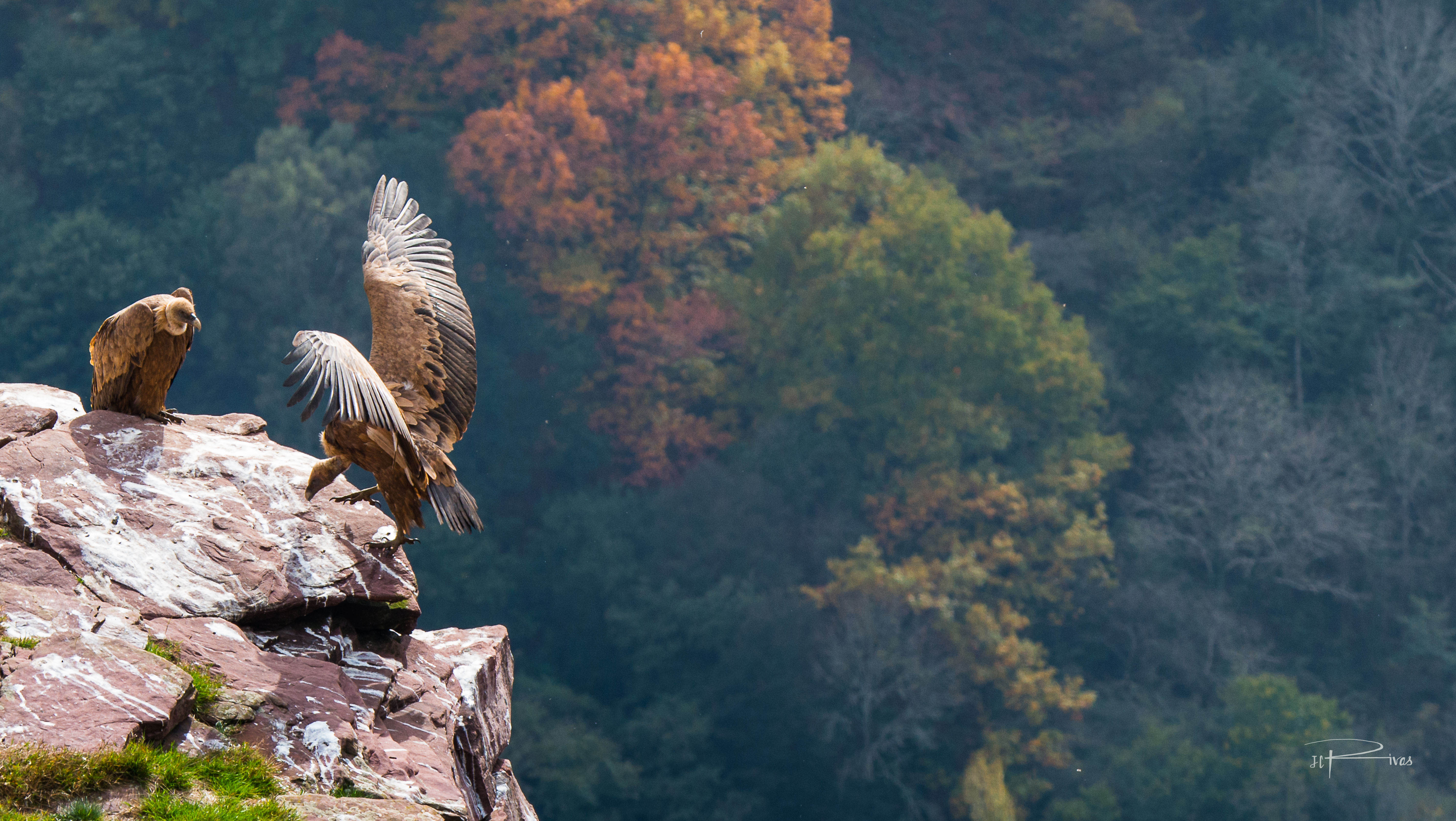 vautours-4