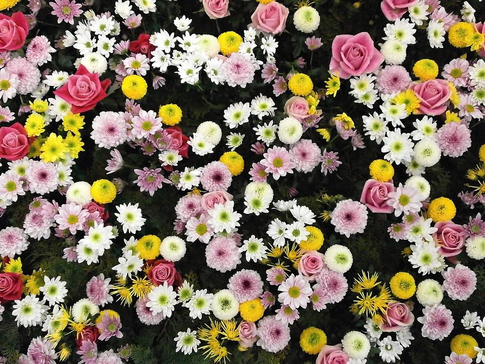 field of flowers outside co-op