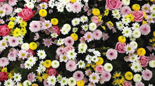 MAY: Flowers and Events are blooming this month...