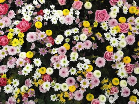 Flowerbed (sometimes)