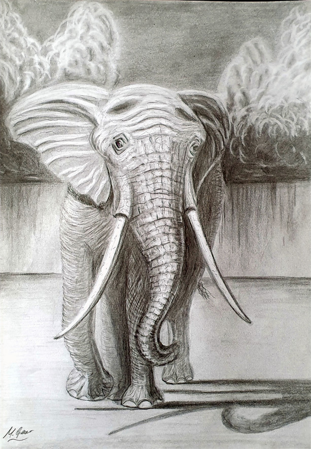 Drawing: Elephant Approaching