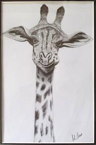 Drawing: Cheeky Giraffe