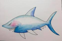 oriente-shark