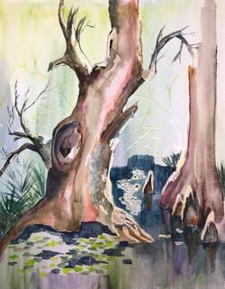 oriente-swamp
