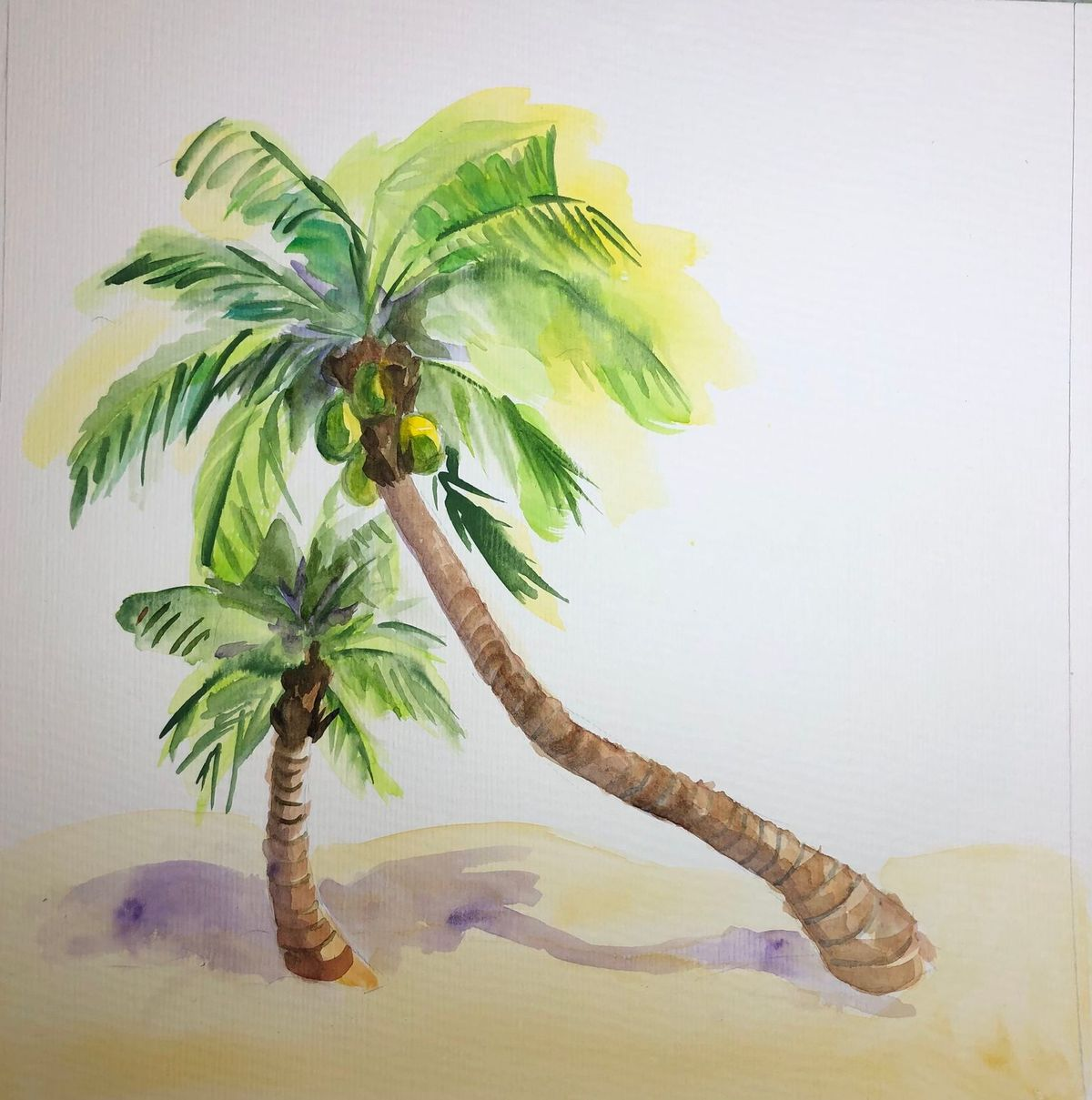 oriente-coconut-tree