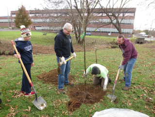26 New Trees for Hallowell Park