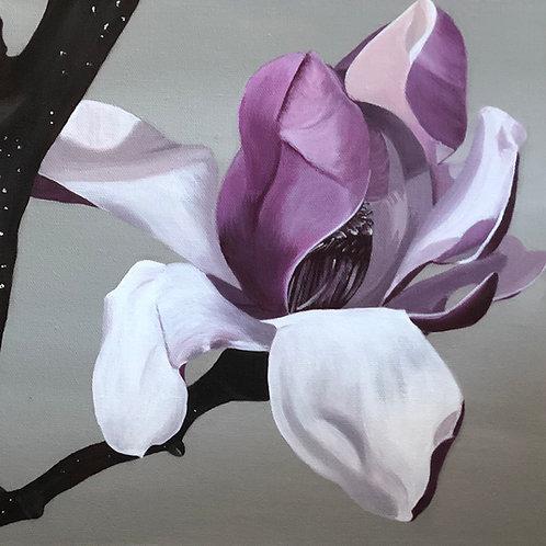 Magnolia Bloom 1