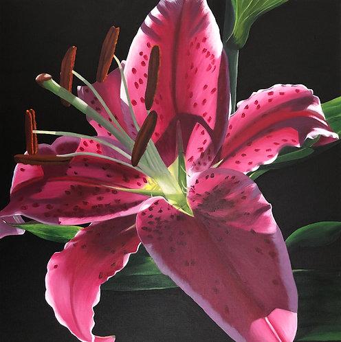 Light Filled Lily - Framed
