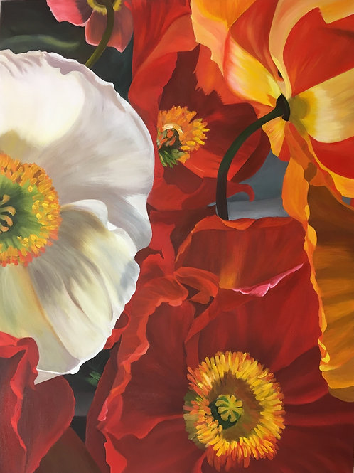 Carnival Poppies
