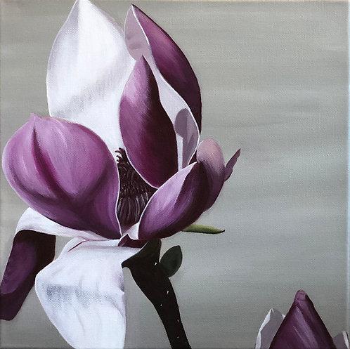 Magnolia Bloom 2