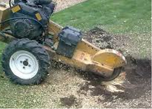 J.Y.C Stump Grinding .png
