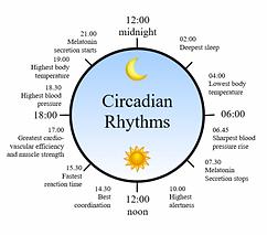 1462983035_circadian-rhythm-clock-600x52