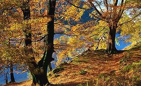 autumn trees 1.jpg