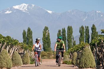 Cycling Vineyards Mendoza