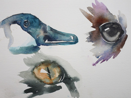 Animal Eyes with Liz Chaderton