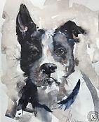 Dogs Portraits & Movement