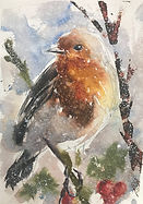 A Robin Red Breast