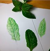 A Hyper-real Leaf