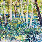 Bluebell Wood Impressions