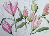 Breezy Lilies