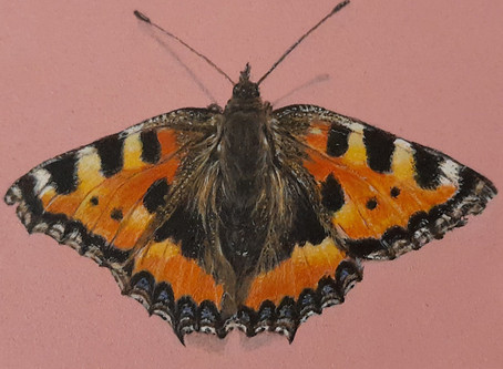 Draw a realistic Peacock Butterfly using grid sketching with Emily Pooley