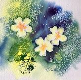 A Spring Primula