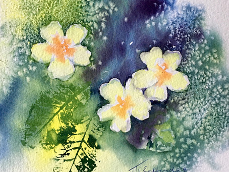 A Spring Primula with Jane Betteridge