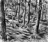 Light & Shade through Woodland Trees