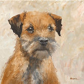 'Smudge' the Border Terrier