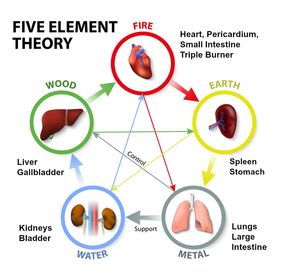Five Element Cycle theory in TCM