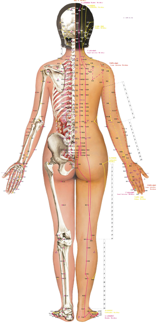 Manage Pregnancy Low Back Pain with Traditional Chinese Medicine (Acupuncture & Tuina)