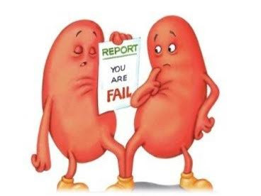 The Kidney relates to the reproductive system