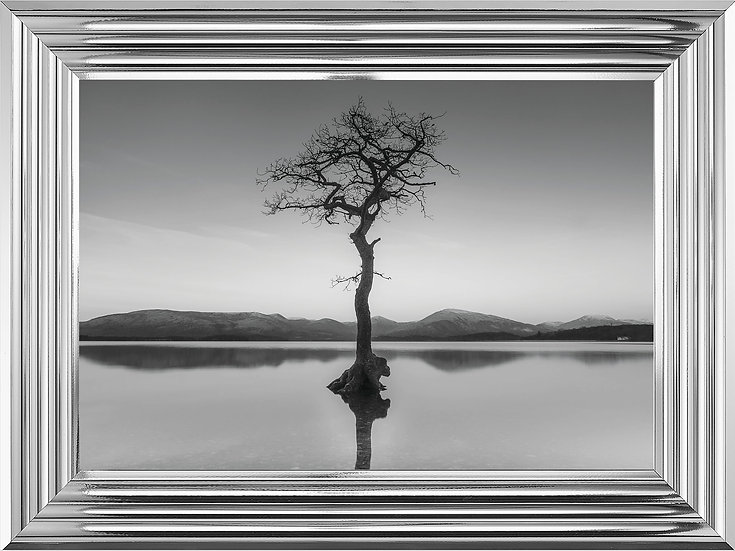 Tree of Solitude in black and white