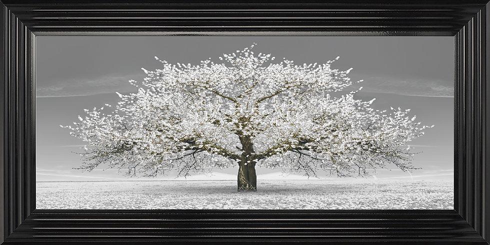 Cherry Blossom Tree White