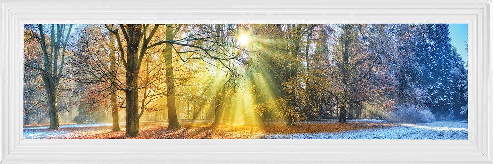 Woodland Summer Sunburst