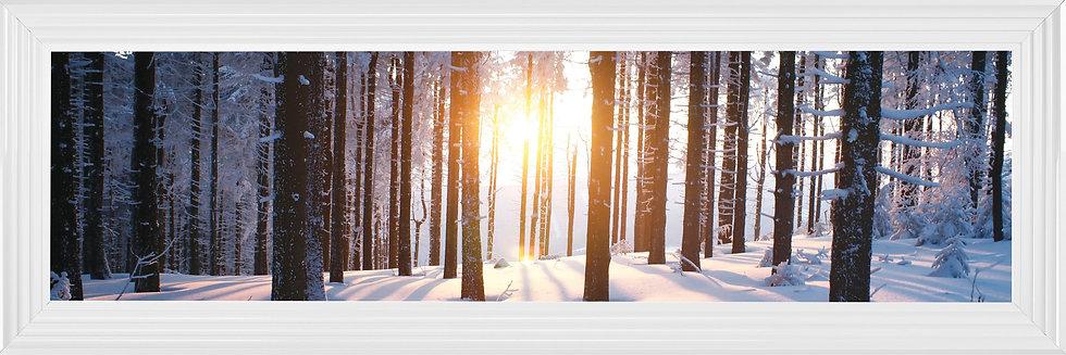 Sunburst though the Winter Forest