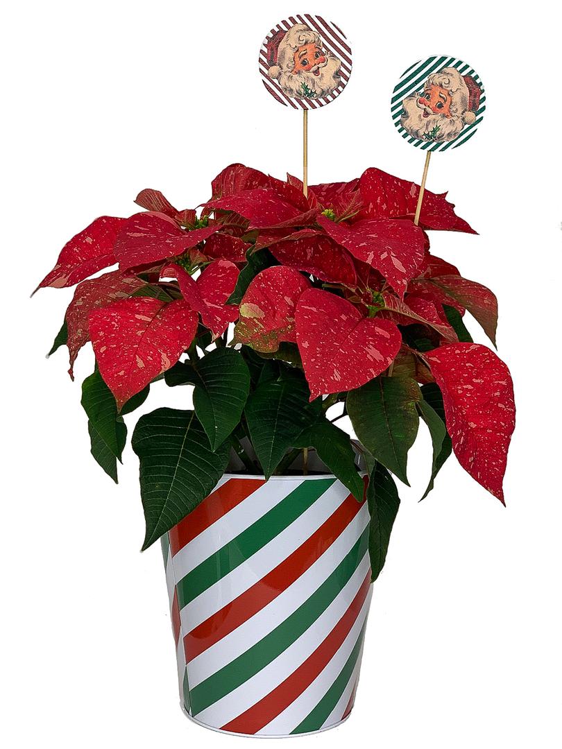 A Santa Stripe-2.tif