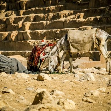 015_Giza.jpg