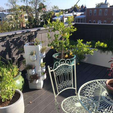 Edible plantings