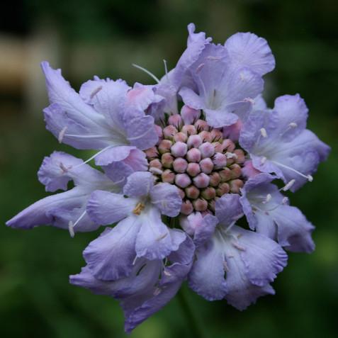 Details of a bloom