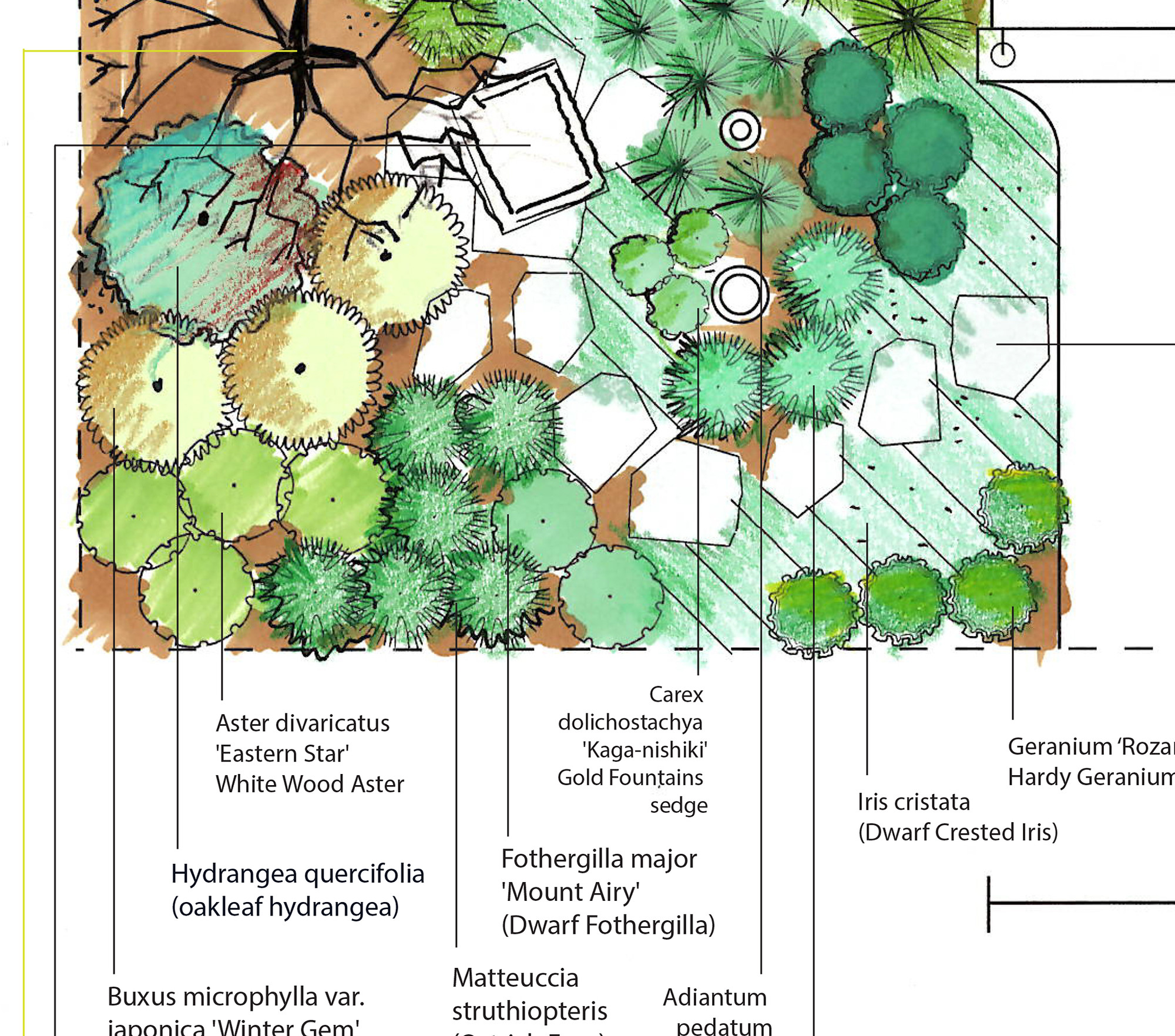 Pollinator Plants For Part Shade To Full Shade Gardens