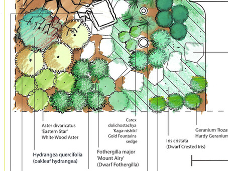 Pollinator Plants for Part-shade to Full-Shade Gardens