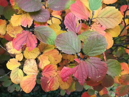 Planting in the fall and gardening for your kids